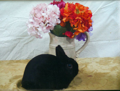 Baxter - Black Polish Winning Rabbit