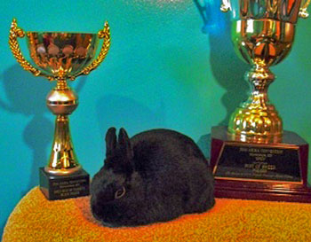 Black Polish ARBA convention best of breed
