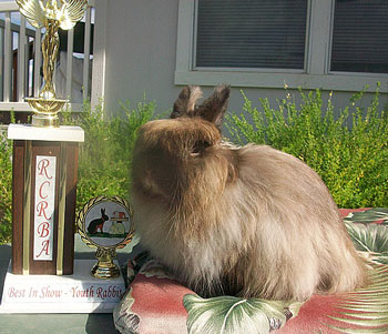 Grand champion sable jersey wooly with trophy