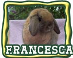 The Nature Trail's Francesca - Champion Holland Lop