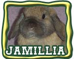 The Nature Trail's jamillia - floppy-eared bunny female