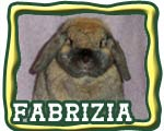 The Nature Trail's Fabrizia - Lady Lop Bunny