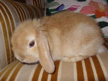 Couch potato bunny reclining on sofa