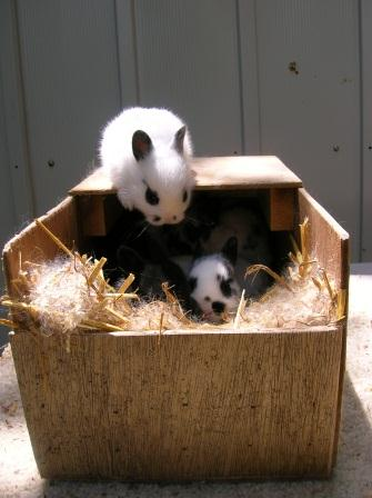 Cute baby bunnies playing on a nesting box