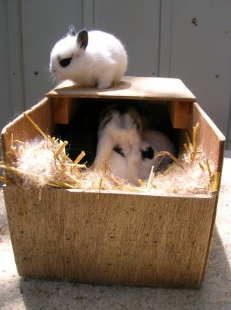cute baby bunnies playing in a nestbox