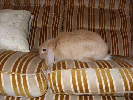 rabbit bunny on couch