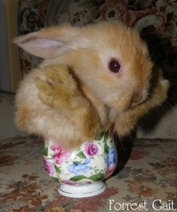 Baby cute lop eared bunny sitting in a teacup
