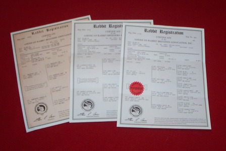 Official rabbit registration papers