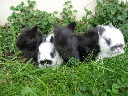 Baby rabbits cuties