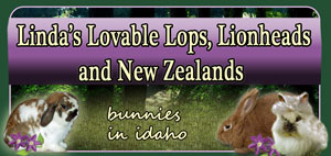 holland lops in idaho
