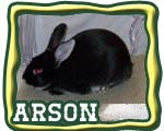 grand champion rabbit button
